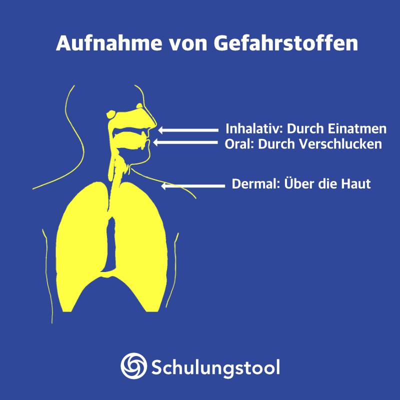Aufnahme von Gefahrstoffen als Teil der Unterweisung Gefahrstoffe: inhalativ, oral und dermal